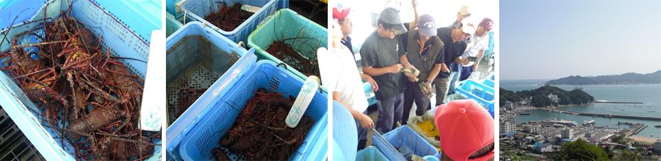 三重県の伊勢海老漁